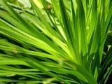 1600*1200 Vista 植物壁纸 (第四辑)