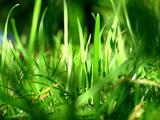 1600*1200 Vista 植物壁纸(第十辑 )   第 276 - 305