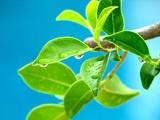 Vista植物壁纸