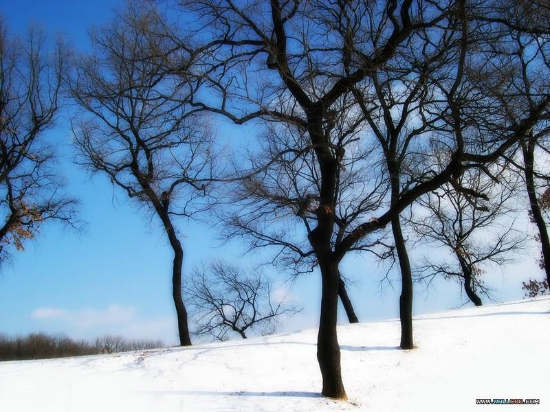 专题摄影 之下雪的天空壁纸图片 第13张