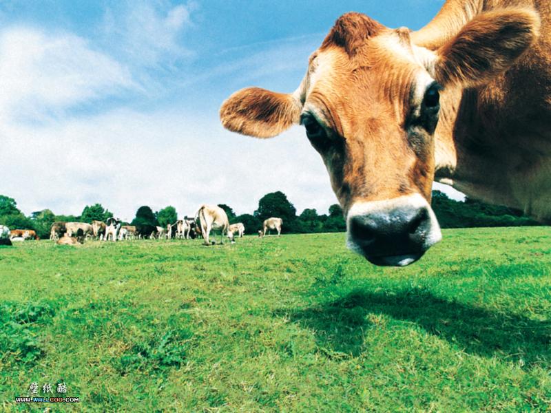 农场记趣-动物大头贴壁纸图片 第2张