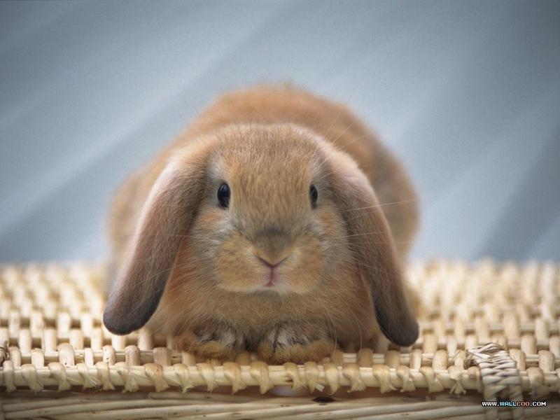 宠物宝贝(三)--可爱兔子53