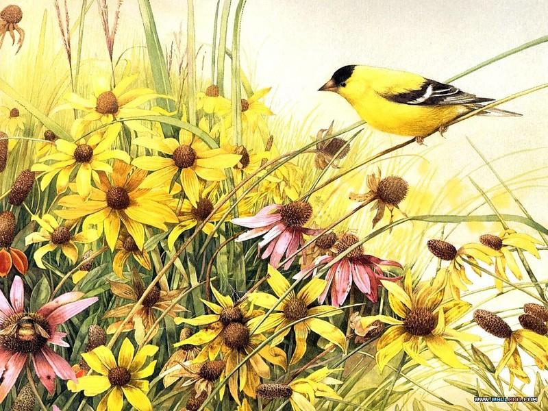 手绘动物 - 小鸟壁纸图片