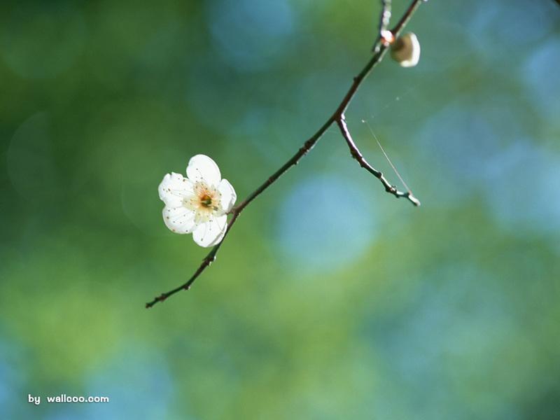 汇源桃花树下 果汁