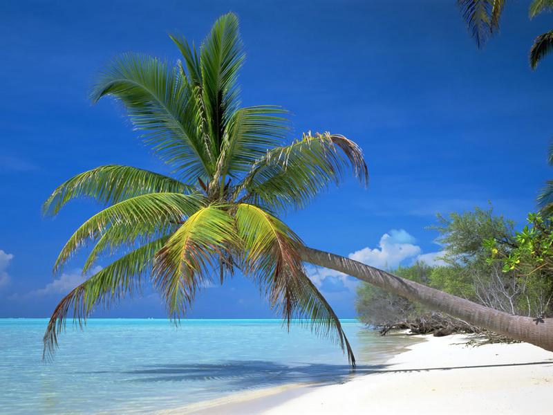 壁纸库 风景壁纸 海滩椰林 海滩椰林4    海滩椰林4
