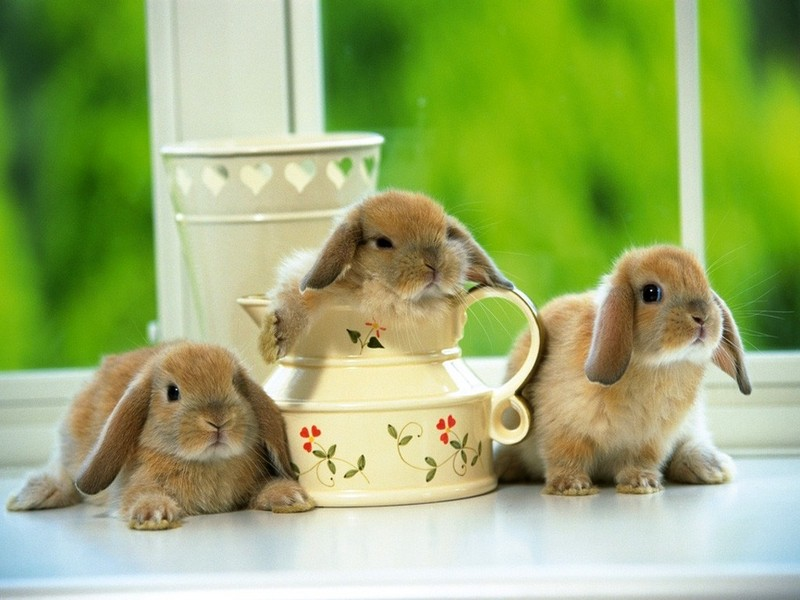 可爱小兔(第01辑)壁纸图片 第3张-zol壁纸库