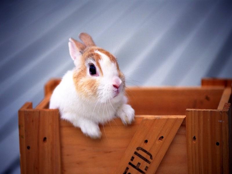 可爱小兔(第02辑)16