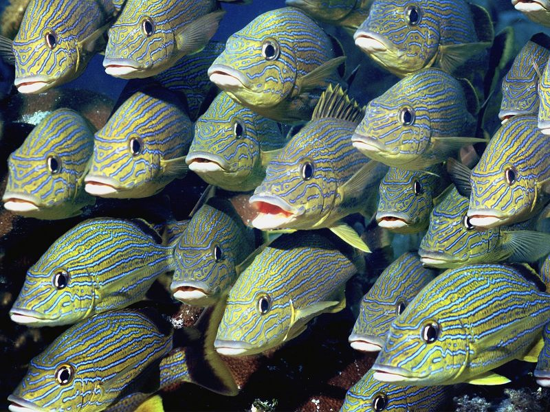 海底世界 上辑 海底世界 上辑16