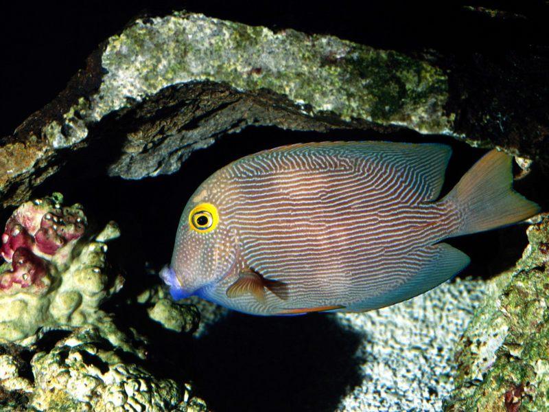 海底世界 下辑 海底世界 下辑10
