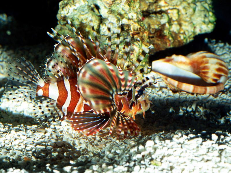 海底世界 下辑 海底世界 下辑38